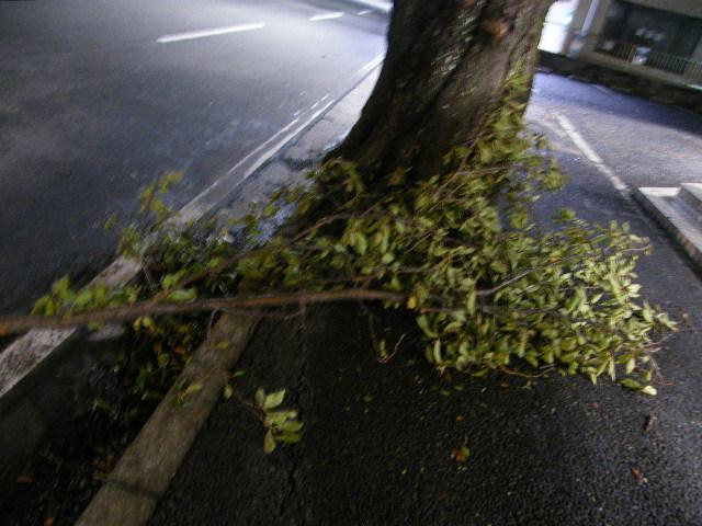 木が折れてる.JPG